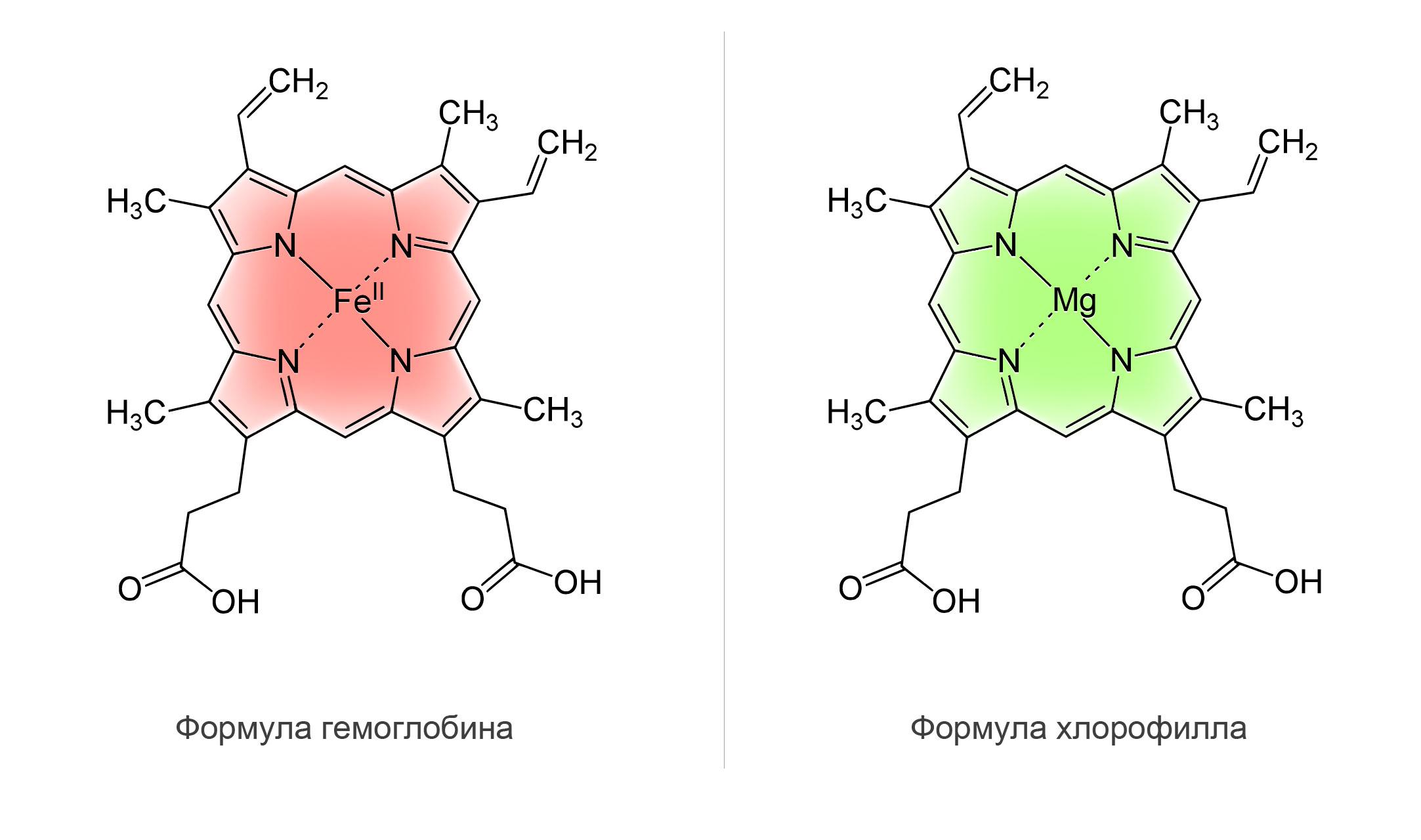 Хлорофилл имеет схожую структуру с гемоглобиномХлорофилл имеет схожую структуру с гемоглобином